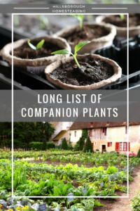 Hillsborough Homesteading's Long List of Companion Plants