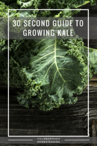 Cheat Sheet for Growing Kale
