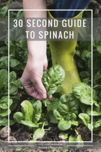 Cheat Sheet for Growing Spinach