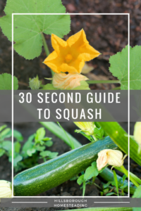 Quick and Dirty Cheat Sheet to Growing Squash