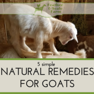 5 Simple Natural Remedies for Goats