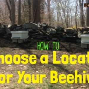 How to Choose a Location for Bee Hives
