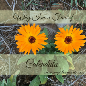 9 Reasons to have Calendula in your Garden