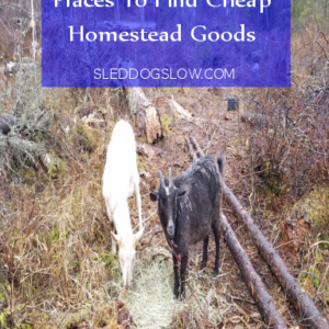 Three Surprising Places To Find Cheap Homestead Goods