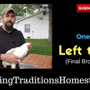 Broiler Chickens- One Week Left to Live (Video Post)