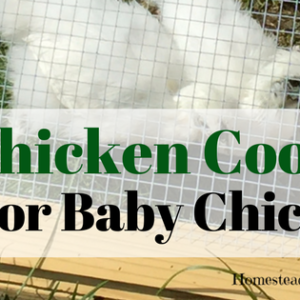 Homestead Chicken Coop For Baby Chicks