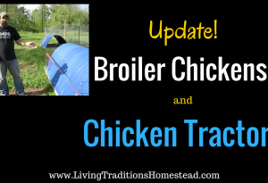 2 Reasons Chicken Tractors Didn't Work for Us