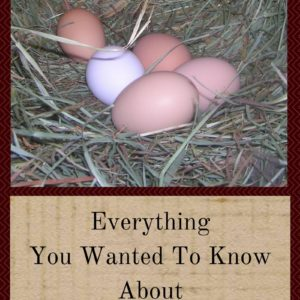Everything You Wanted To Know About Chicken Eggs