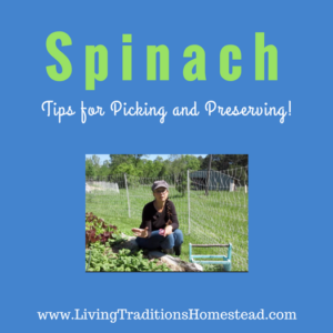 How to Cut Spinach and Tips for Preserving It