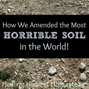 How We Amended the MOST Horrible Soil in the World!