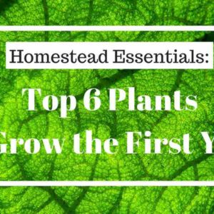 Top 6 Plants to Grow the First Year on a New Homestead