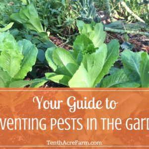 Your Guide to Preventing Pests in the Garden