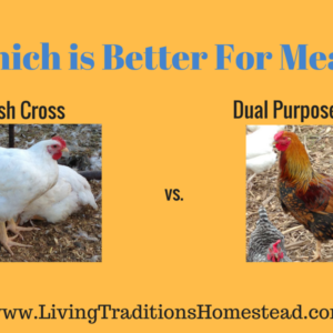 What's the Difference?  Cornish Cross vs. Dual Purpose Meat Chickens