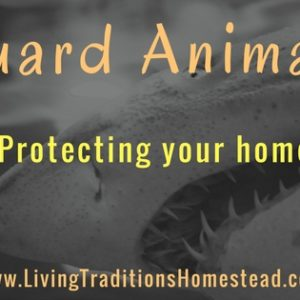 Guard Animals on the Homestead- Video Post