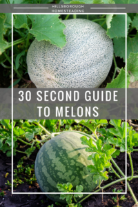 Quick Reference Sheet for Growing Melons