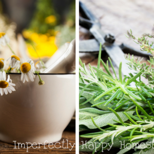 The 15 Best Medicinal Herbs