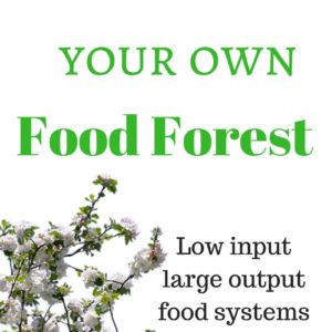 5 Steps to Developing your own Food Forest
