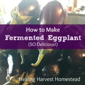 How to Make Fermented Eggplant….An Awesome Garnish! Who Knew?