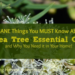 INSANE Things You Need to Know About Tea Tree Oil..And Why You Need It in Your Home
