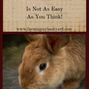 Breeding Rabbits Is Not As Easy As You Think