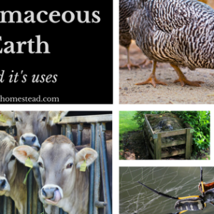 Diatomaceous Earth and Its Uses