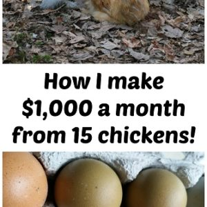 How I make $1,000 a month from 15 chickens