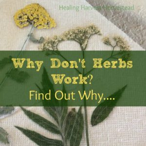 Why Herbs Don't Work (They Do….But Here are Some Reasons They May Not be Working for YOU!)