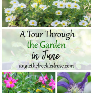 A Tour Through The Garden In June