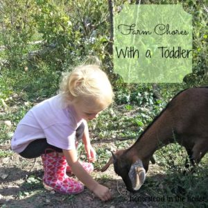 Farm Chores with a Toddler