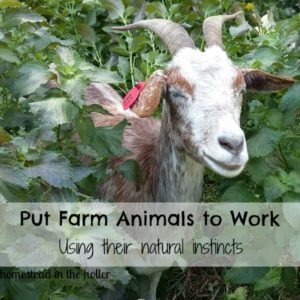 Putting Farm Animals to Work