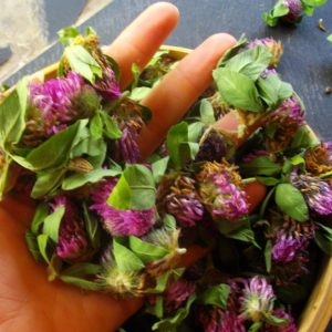 Five Edible and Medicinal Wild Plants