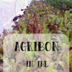 Agribon in the Garden
