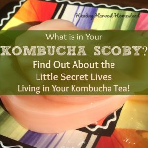 What is in Your Kombucha Tea? And What on Earth is a SCOBY?