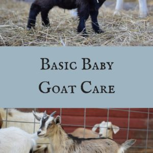 Baby Goat Care