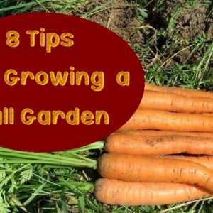 8 Tips for Growing a Fall Garden