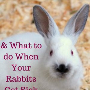 Preventing Rabbit Diseases in your Rabbitry