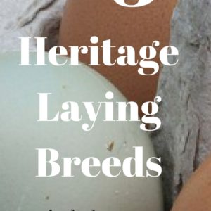 Top 3 Heritage Egg Laying Chicken Breeds