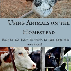 Using Animals on the Homestead