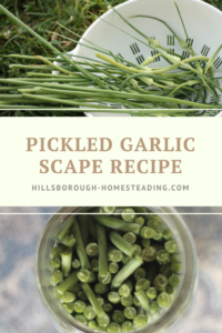 How to Pickle Garlic Scapes [Recipe]