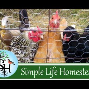 Getting Our First Livestock…Finally