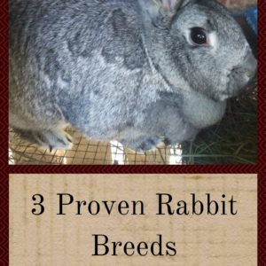 3 Proven Rabbit Breeds for the Best Backyard Herds
