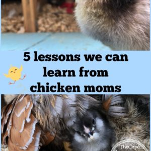 5 Lessons we can Learn from Chicken Moms
