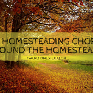 Fall Homesteading Chores