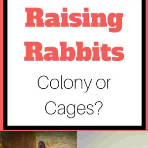 Colony vs Cage – What is the best way to raise rabbits?