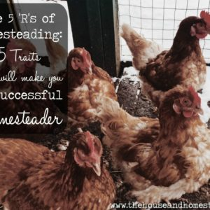 5 Traits That Will Make You a Successful Homesteader