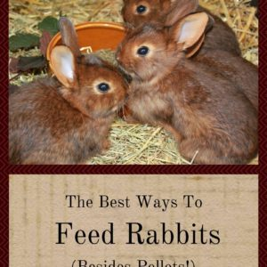 The Best Ways To Feed Rabbits (Besides Pellets)!