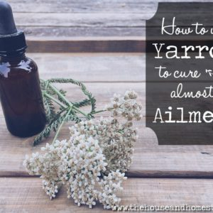 How to Treat Almost Any Ailment with Yarrow