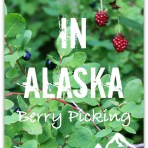 Foraging in Alaska – Berry Picking