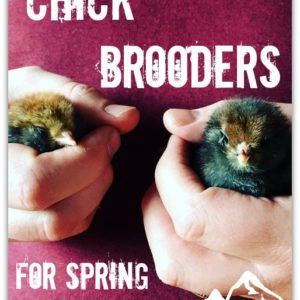 Your Choice of Chick Brooders for Spring