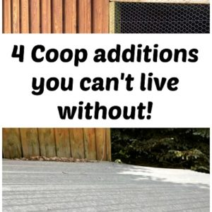 4 Coop additions you can't live without
